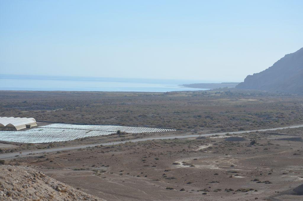So tot ist es gar nicht am Toten Meer. In der fruchtbaren Ebene wachsen Datteln und Gemüse. Januar 2014